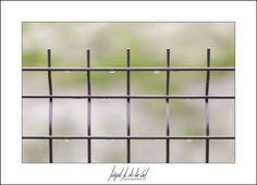327/365 - Gotas de agua. Miguel A. de la Cal. Alcorcón. DelaCal. www.fotobodadelacal.es