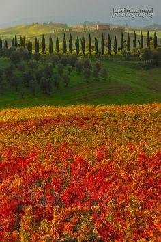 Autumn In Tuscany , Italy
