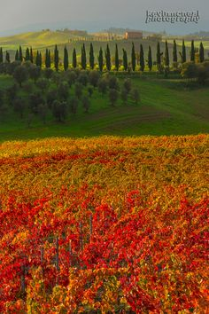 Autumn In Tuscany , Italy