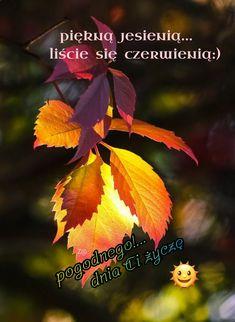 Autumn, Movie Posters, Movies, Fall Season, Films, Film Poster, Fall, Cinema, Movie