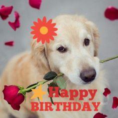 Die 31 Besten Bilder Von Happy Birthday Hund In 2019 Birthday