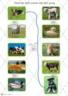 Teacher's Pet - Farm Animals and their Babies (cut & stick) - Premium Printable Classroom Activities and Games - EYFS, KS1, KS2, farming, ba...