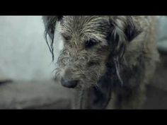 Watch this! Pedigree 2013 Feeding Brighter Futures Ad Bad Dog, Good Dog - YouTube