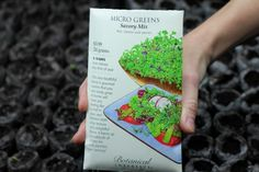 How to grow micro greens Growing Sprouts, Growing Microgreens, Micro Garden, Vegetable Garden, Gardening Vegetables, Organic Gardening, Indoor Gardening, Winter Garden, Health And Wellbeing