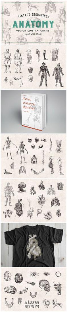 Set of 76 vintage engraving-style anatomical illustrations Retro Logos, Be A Nice Human, Human Anatomy, Color Change, Vintage Inspired, Illustrations, Graphic Design, Prints, Inspiration