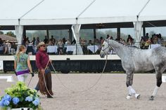At the Dressage Summit in Wellington FL - Beautiful horse, now looking much more confident and settled.
