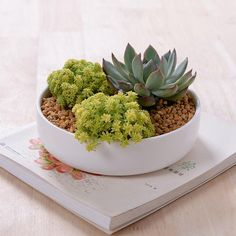 Modern Zakka Ceramic Flower Pot Round White Glazed Ceramic Planter For Succulents  Desktop Decorative Bonsai pot