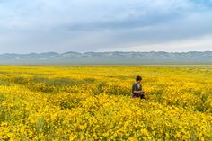 Wildflower Superbloom in Carrizo Plain National Monument | California  Only 3 hours away from Los Angeles!