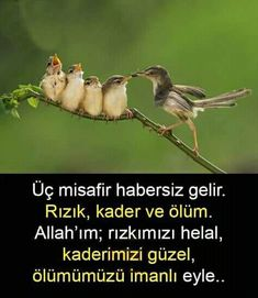 Islam Muslim, Allah Islam, Learn Turkish Language, Meaningful Words, Cool Words, Life Lessons, Spirituality, Instagram Posts, Animals