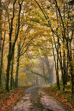 """""""A Touch Of Gold"""" (misty country road near Ashland, Missouri) by Cricket Hackmann cr.af."""