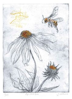 apis mellifera- the honey bee. drypoint etching, screen print and ink Wonder I could do similar effect in collagraph? Intaglio Printmaking, Collagraph, Art And Illustration, Drypoint Etching, Etching Prints, Painting & Drawing, Encaustic Painting, Textile Art, Screen Printing