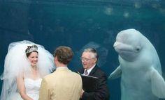 Wedding Photo Bomb by -- OMG!