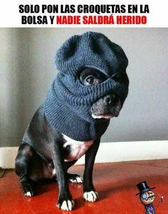 Perro atracador