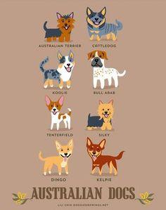 cães australianos