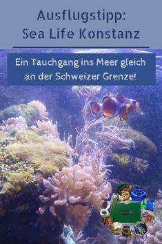Schlechtes Wetter? Und ihr sucht einen spannenden Forscher-Ausflug? Geht mit uns im Sea Life Konstanz-Center auf Tauchgang - mit Gewinnspiel! Konstanz, Natural Wonders, Environmentalism, Addiction, Road Trip Destinations, Crate, Weather