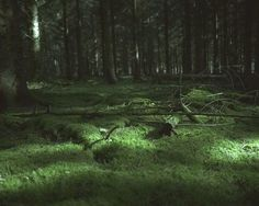 Estonians are known to be the forest people. Nearly half of Estonia is covered by the forest and a lot of people have a strong connection with it. Half Elf, Maze Runner, Dragon Age, Pokemon, Narnia, Slytherin, Wicca, The Magicians, In This World