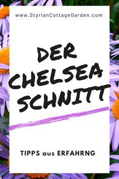 Mit dieser Schnitt Technik die Standhaftigkeit der Pflanzen erhöhen und die Blüte verlängern Chelsea, Shade Perennials, Plants, Tips, Chelsea Fc, Chelsea F.c.