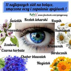 … stosowanie ziół w leczeniu chorób oczu … | Medycyna naturalna, nasze zdrowie, fizyczność i duchowość