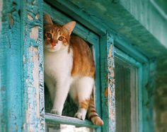 rustic red cat at the blue window   by lera_abrakadabra