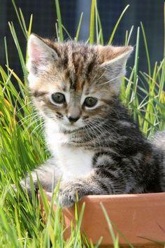 Fluffy kitten alert!