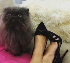 Como não amar sapatos? Levanta qualquer look, humor e até levanta a gente…
