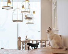 原宿駅徒歩0分。2016年3月OPEN 流行最先端の街、原宿におしゃれ猫カフェが誕生。
