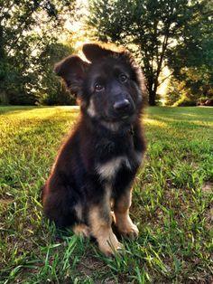 He Enjoys Moonlit Walks | Cutest Paw