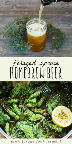 This delicious and refreshing spruce beer recipe is easy to make and uses foraged spruce tips or any other edible conifer needles. If you're a fan of making homebrew, this is a great recipe to try in the winter! Brewing Recipes, Homebrew Recipes, Beer Recipes, Cooking Recipes, Homemade Wine Recipes, Homemade Beer, Ginger Ale, Spruce Tips, Mead Recipe
