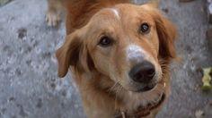 A Dog's Purpose Trailer #ADogsPurpose #BrittRobertson #BradleyCooper #PeggyLipton