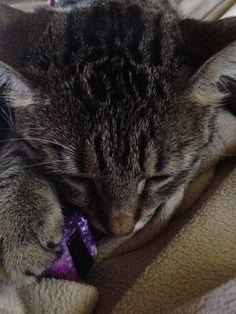 Cat loves his fidget cube #aww #cute #cutecats #catsofpinterest #cuddle #fluffy #animals #pets #bestfriend #boopthesnoot