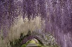 whimsical - Google Search