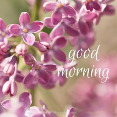 Good Morning image with pink flowers