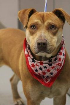 ADOPTED> NAME: Darbi  ANIMAL ID: 34865167  BREED: Retriever mix  SEX: male(altered)  EST. AGE: 3 yr  Est Weight: 66 lbs  Health: Heartworm neg  Temperament: dog friendly, people friendly  ADDITIONAL INFO: RESCUE PULL FEE: $35  Intake date: 3/15  Available: Now
