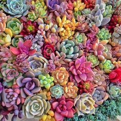 美しい. The variety of colors, shapes and textures is why I LOVE Succulents!