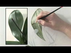 DVD - Watercolour Flower Portraits with Billy Showell - YouTube