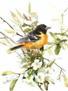 Baltimore Oriole Original watercolor painting 9 X by ORIGINALONLY, $44.00