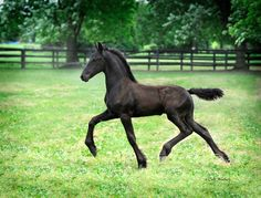One day when i grow up I'm gonna buy a Friesian foal and name it Kaliden.