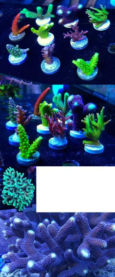 6 For $49.99 A Great Variety Of Models Energetic 6 Frag Pack wyswyg