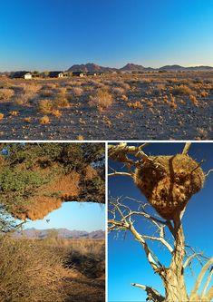 One of the most luxurious stays you can have in Namibia is at Little Kulala - surrounded bt beautiful desert and some of the world's highest sand dunes. Land Of The Brave, Us Travel, Grand Canyon, Africa, Things To Come, Camping, World, Beautiful, Campsite