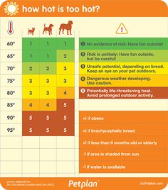 Heat stroke, or hyperthermia, is not uncommon in warmer months, and although you may associate it with pets left in hot cars, the truth is that heat stroke can occur even in your own backyard. Use this chart to keep your best friend safe!