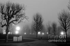 Fine art photography of Volksgarten Fog in Vienna by John Rizzuto. Vienna, Fine Art Photography, Fine Art Prints, Celestial, Outdoor, Outdoors, Art Photography, The Great Outdoors, Artistic Photography