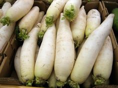 White Icicle Radish seeds thru 1 LB) Fast Grow Survival Heirloom Vegetable Nutrition, Vegetable Recipes, Fruits And Vegetables, Veggies, Soup Recipes, Vegan Recipes, Nutritional Value, Culinary Arts, Food Hacks