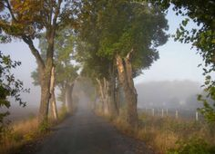 Avenue a Misty Morning in Falltime jigsaw puzzle Autumn Morning, Foggy Morning, Puzzle Of The Day, Stockholm Sweden, Natural Wonders, Vacation Trips, Bro, Travel Photos, Paths
