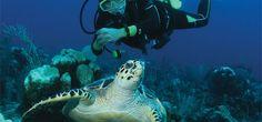 Nature and wild life in Riviera Maya, Mexico Vacation Packages | Riviera Maya Vacations with Signature.ca