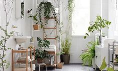 bathroom-plant-featured-image-800x445