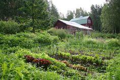 Kasvimaa Balcony Garden, Vineyard, Plants, Outdoor, Outdoors, Vine Yard, Vineyard Vines, Plant, Outdoor Games