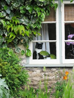 Looks just like my kitty, Murray.  This was taken in Lacock where the Cranford series was filmed.