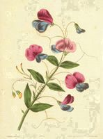 Book on line about flower painting