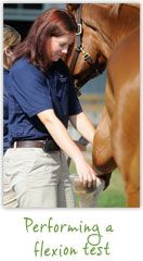 McKee-Pownall Equine Services | Sport Horse Medicine | Dr. Kathryn Surasky