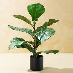 Small Faux Fiddle Leaf Fig | Magnolia Silos Baking Co, Fiddle Leaf Fig Tree, Sense Of Life, Chip And Joanna Gaines, Guest Room Office, How To Start Yoga, Faux Plants, Ceramic Planters, Throw Pillows